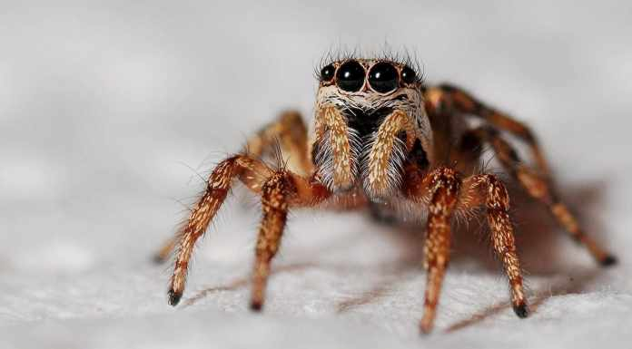 Outlook on Spiders
