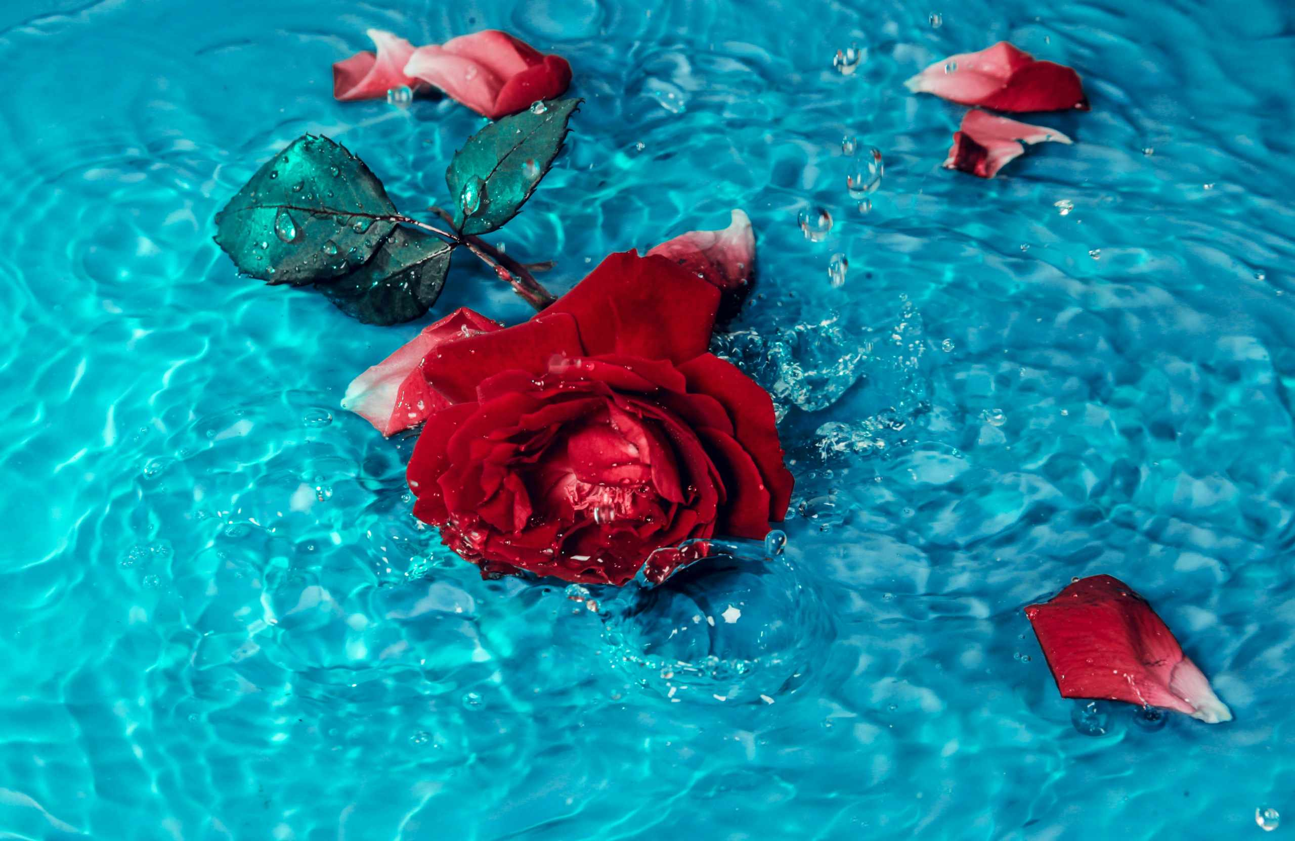 Rose for good health and wellbeing